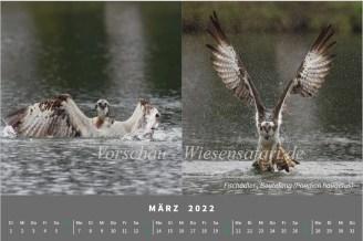 Vorschau, Cal. März 2022, Sonja Haase