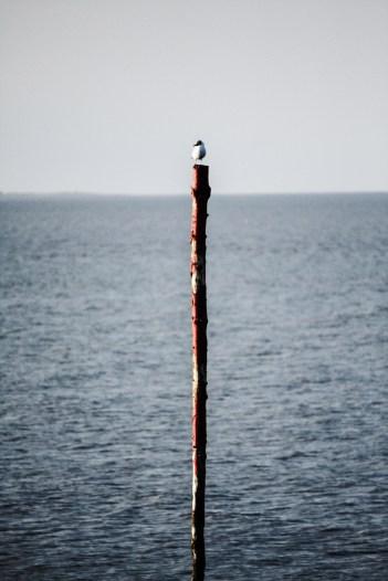 Michael Wieser Wilhelmshaven - Fotografie Landschaften Meer Möve