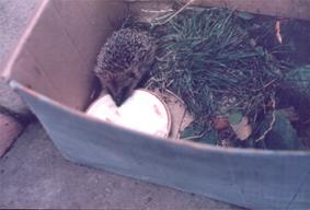 1_Spike the Hedgehog