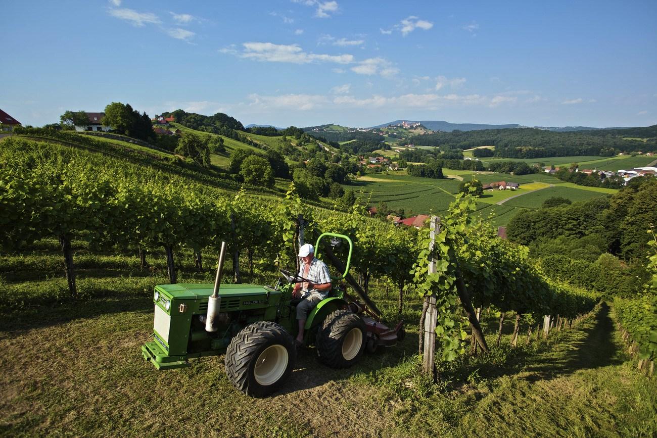 Lagenweine: Wein, der sich abgrenzt