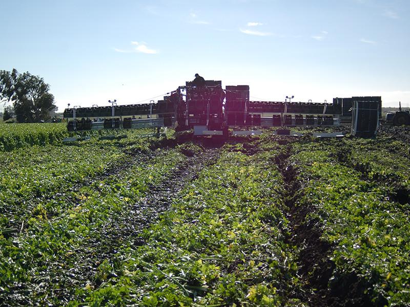 harvester-in-field