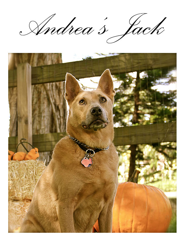 Andrea's Jack - Wiggle Waggle Tails Pet Sitting and Dog Walking