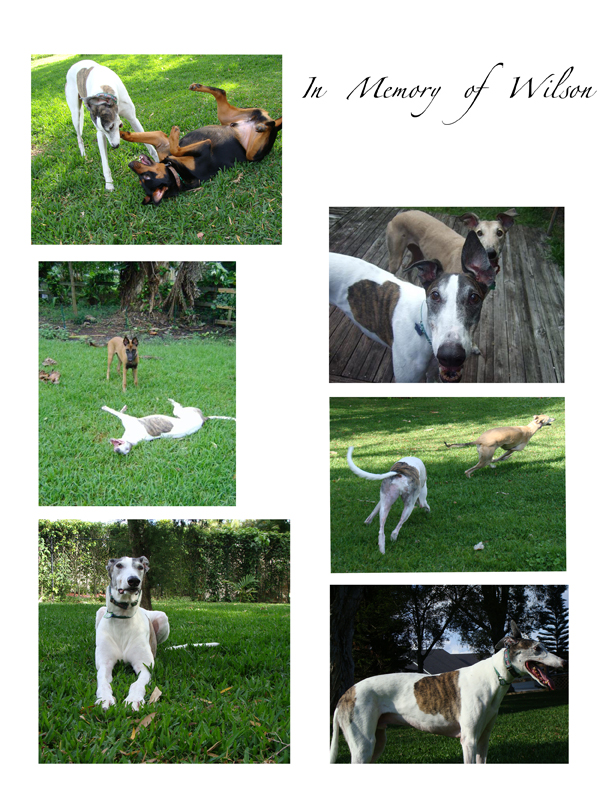 Wiggle Waggle Tails - In memory of Wilson
