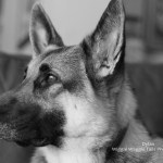 Wiggle Waggle Tails Photography - Dylan