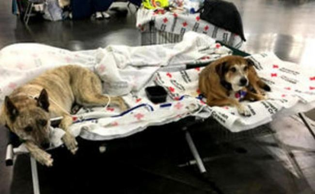 Pets Affected By Hurricane Harvey