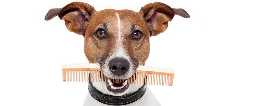 dog-grooming-nc-slide-1