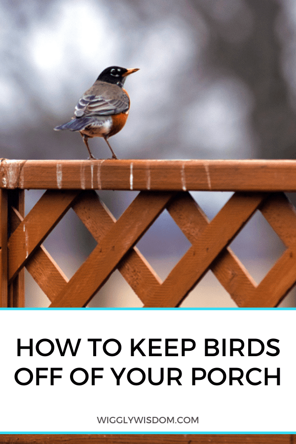 keep birds off of your porch