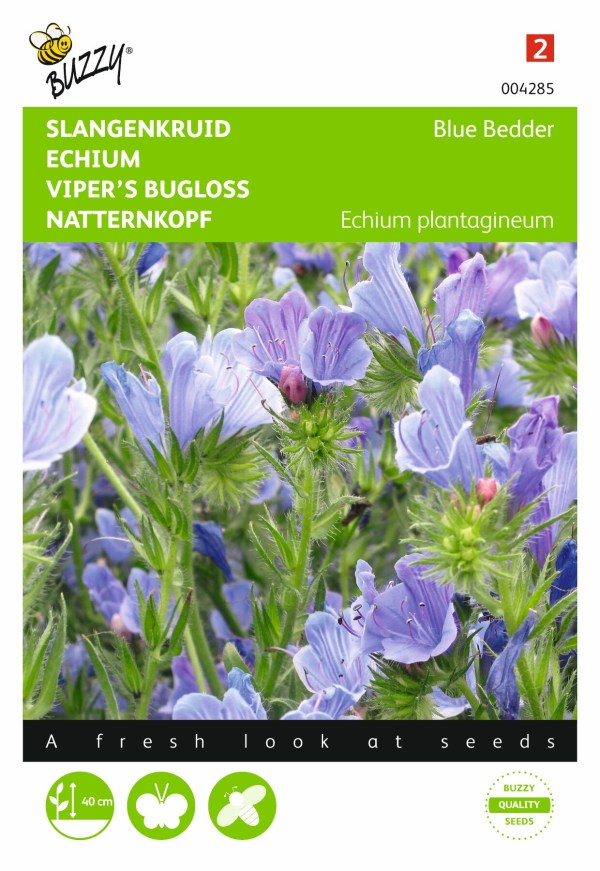 Echium plantagineum Blue Bedder