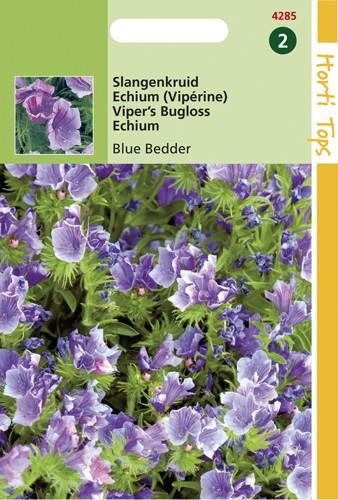 Hortitops Echium Plantagineum Blue Bedder