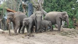 Olifanten-familie-8-570x320