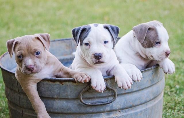 Kosten puppycursus?