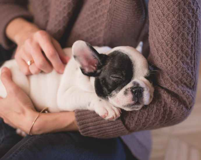 person in brown cable knife sweater holding white and black puppy