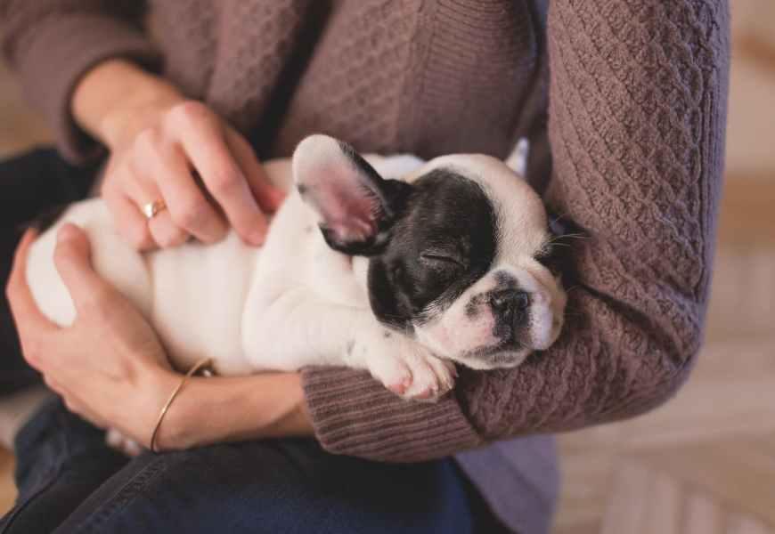 Oorontsteking hond: hoe te herkennen en te behandelen