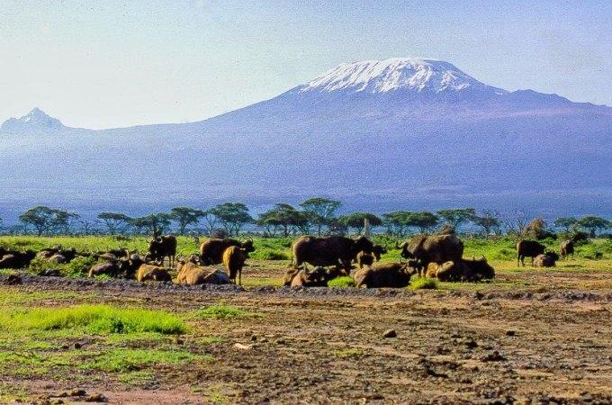 De mooiste parken van Tanzania