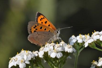 butterfly 3905370 960 720
