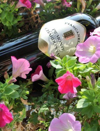italiaanse wijnen uit piemonte