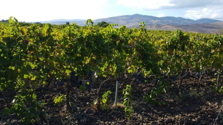 op vakantie naar Sicilië:: Feudo Vagliasindi