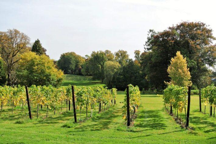 Belgische wijn: Château de Bioul wijngaard