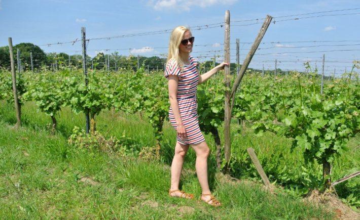 wijngaard Klein Amerika