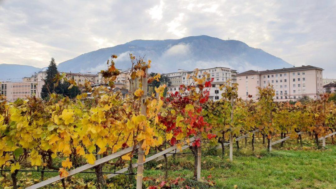Muri Gries wijngaard