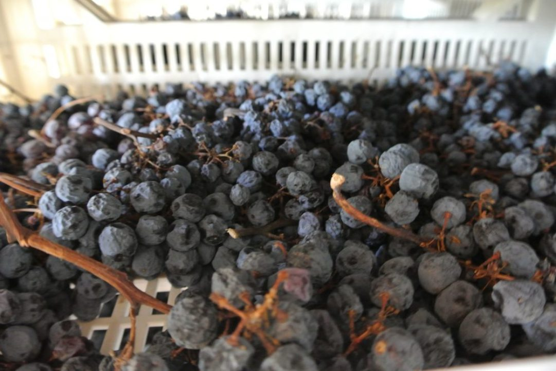 wijnreis naar Valpolicella: Pietro Zardini druiven drogen