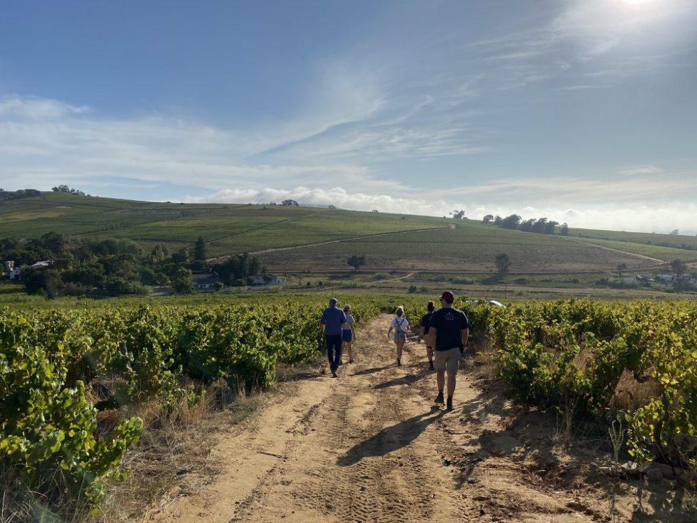 wijn Zuid Afrika