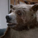 c+ours The Bear - Canal +