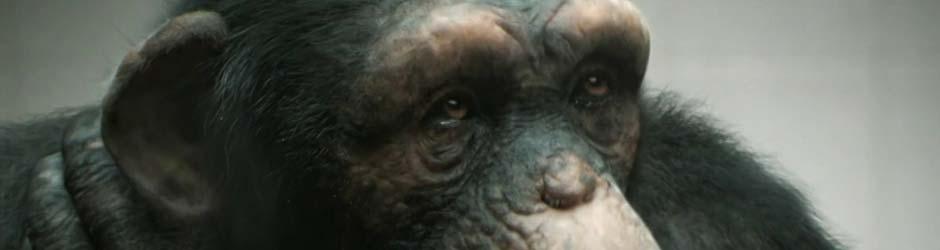"""peta PETA """"98% Human"""""""