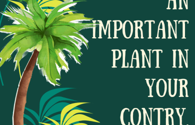 Coconut plan, important plant in your country