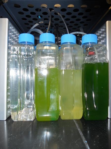Algae!