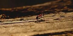تفسير حلم النمل