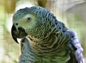 أكثر الطيور ذكاءً في العالم بالترتيب