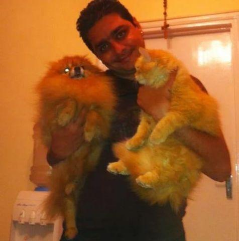 Hindustani Bhau with his pets