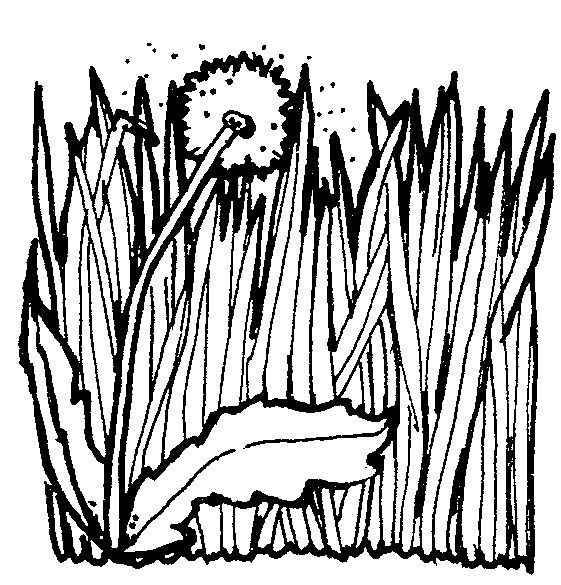 grass black and white art herb clipart images on