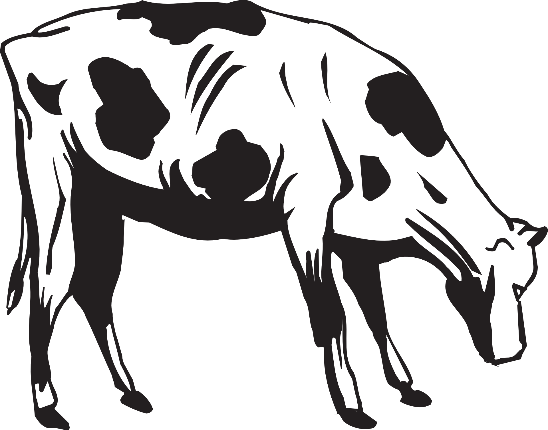 Grass Black And White Black Cow Eating Grass Clipart
