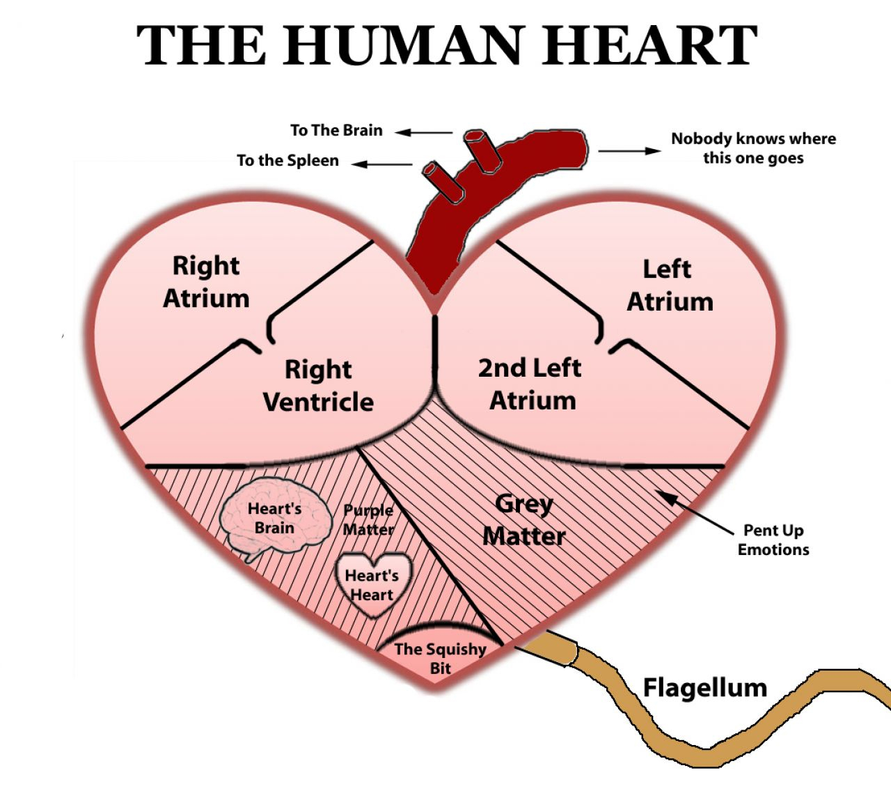 Real Heart Human Heart Pattern Use The Printable Outline