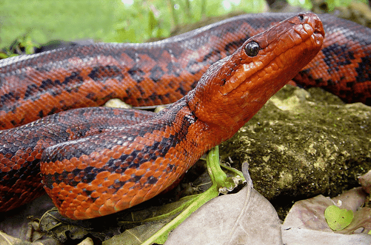 Los Reptiles Endémicos de República Dominicana 2