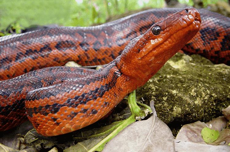 Los Reptiles Endémicos de República Dominicana 3