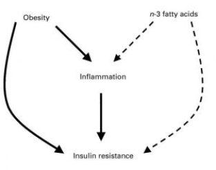 Obesity_Omega-3_wikigimnasio_com
