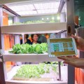 Play your own Farm Cube with iPad controlled garden