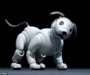 Disney unveils the new prototype robot that moves just like a real dog