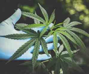 How Can Marijuana Be Beneficial?