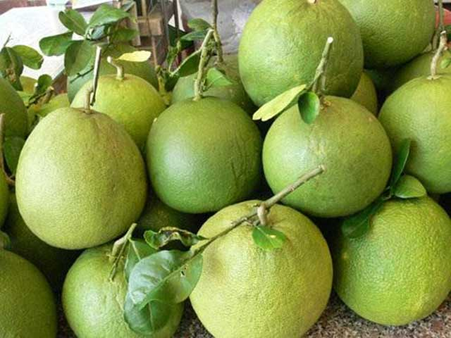 The process of growing green grapefruit to collect sweet fruits