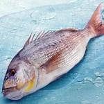 La Corvina, un pez grande con un gran sabor