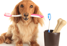 Brushing Your Dog's Teeth