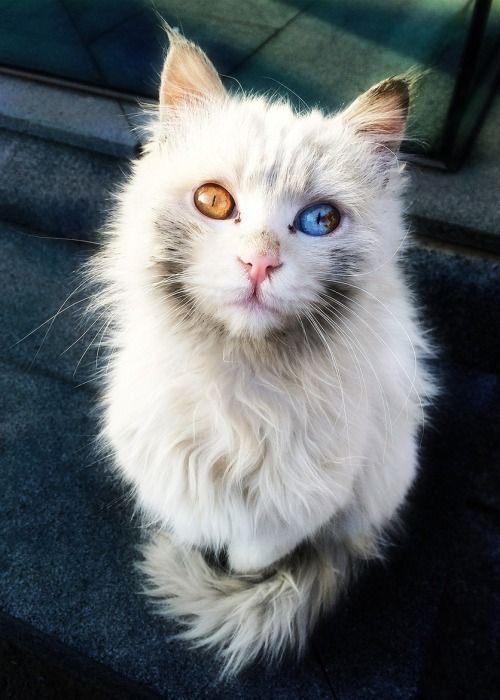 Common Cat Allergies: Causes, Symptoms and Treatments 3
