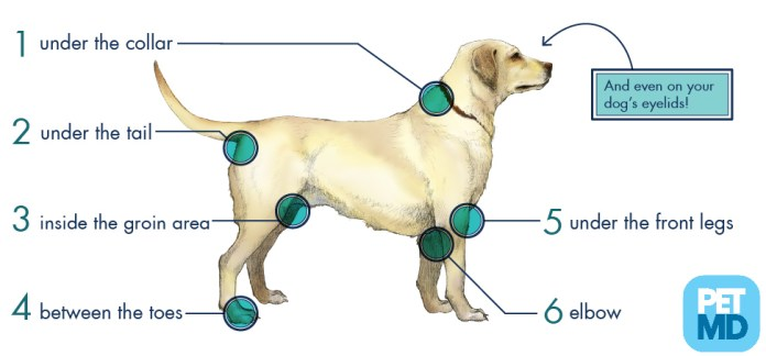 Where To Look For Ticks in Dogs.