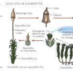 Evolución en el mundo de los vegetales