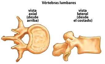 vertebras lumbares