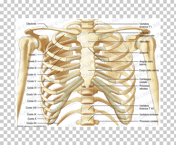 vista posterior (de la espalda)